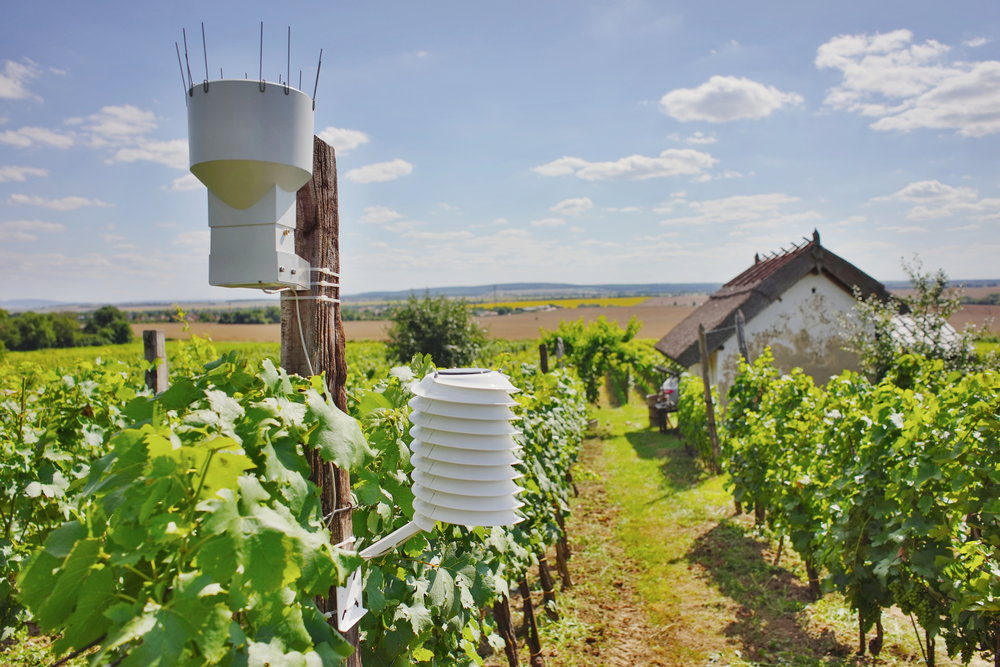 Winery weather station with a rain sensor