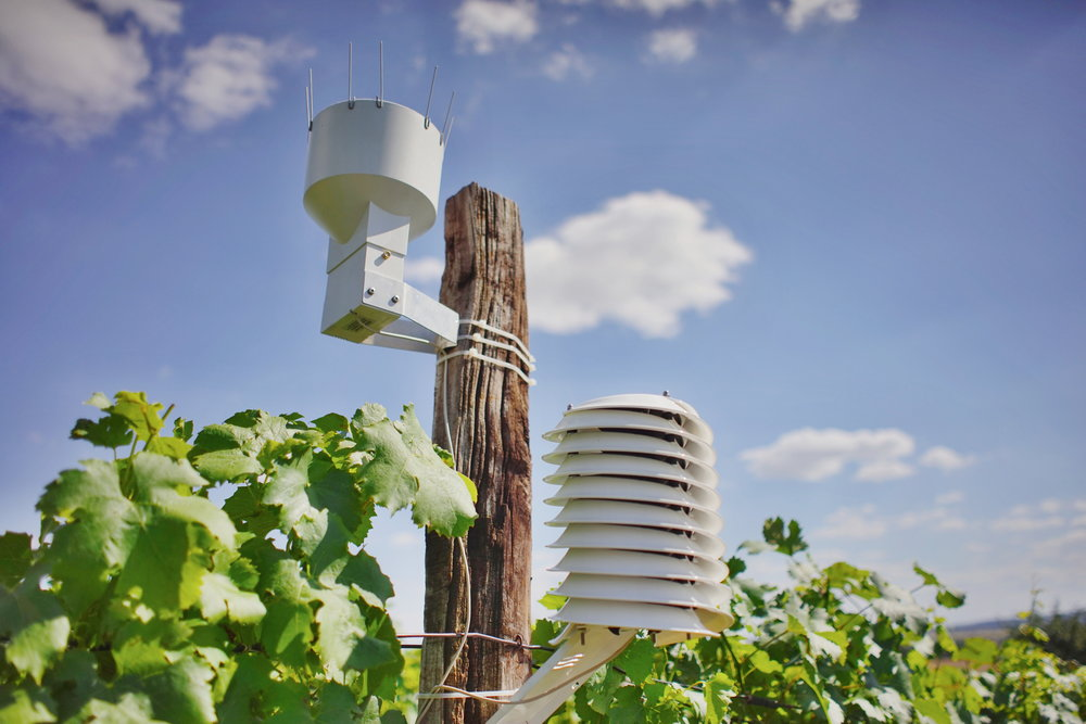 Wine growing weather station with a rain gauge