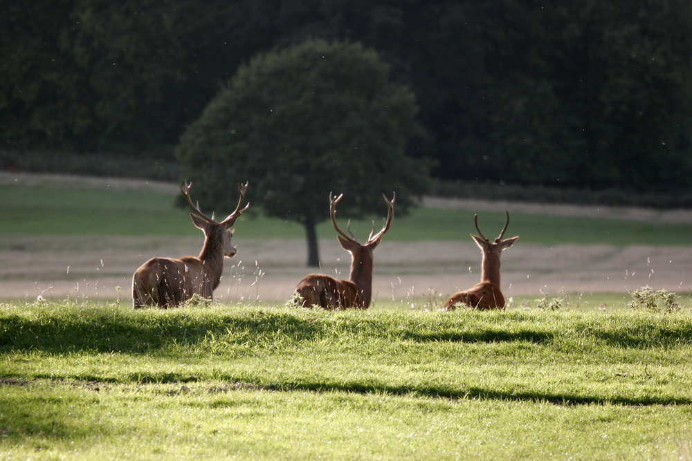 Image Credit: CC by  Richmond Park/Google Images
