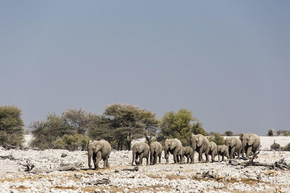 ETOSHA NATIONAL PARK  - Namibia's Greatest Wildlife Park