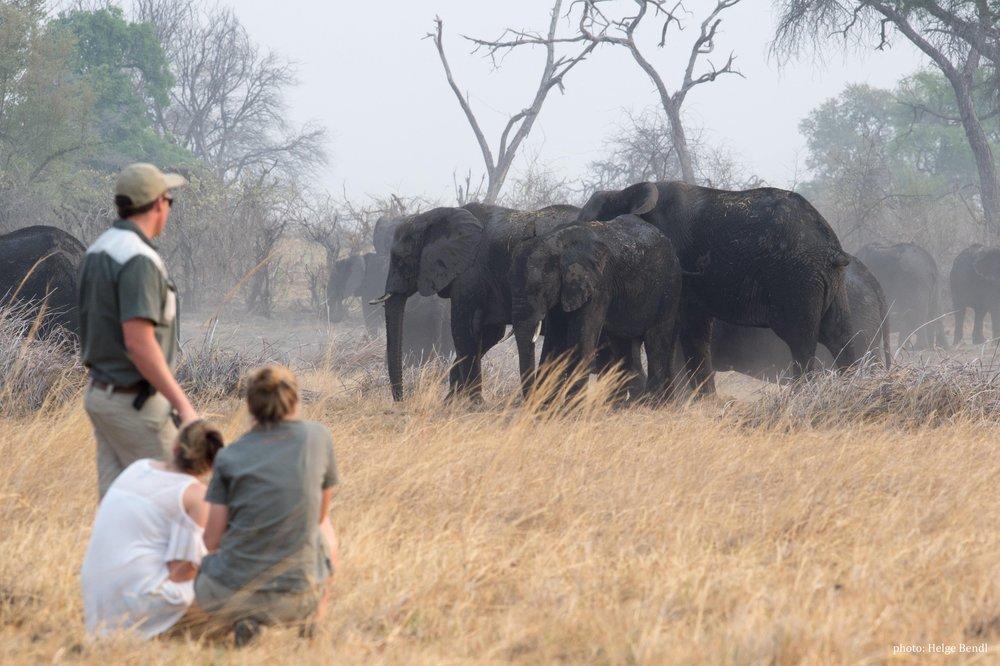 yoga retreat africa walk with elephant