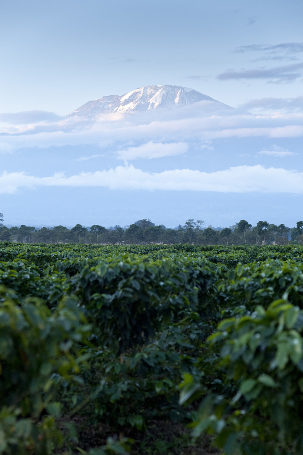GDF Fundraiserclimb - Mt. kilimanjaro - moshi, kilimanjarodates tbc
