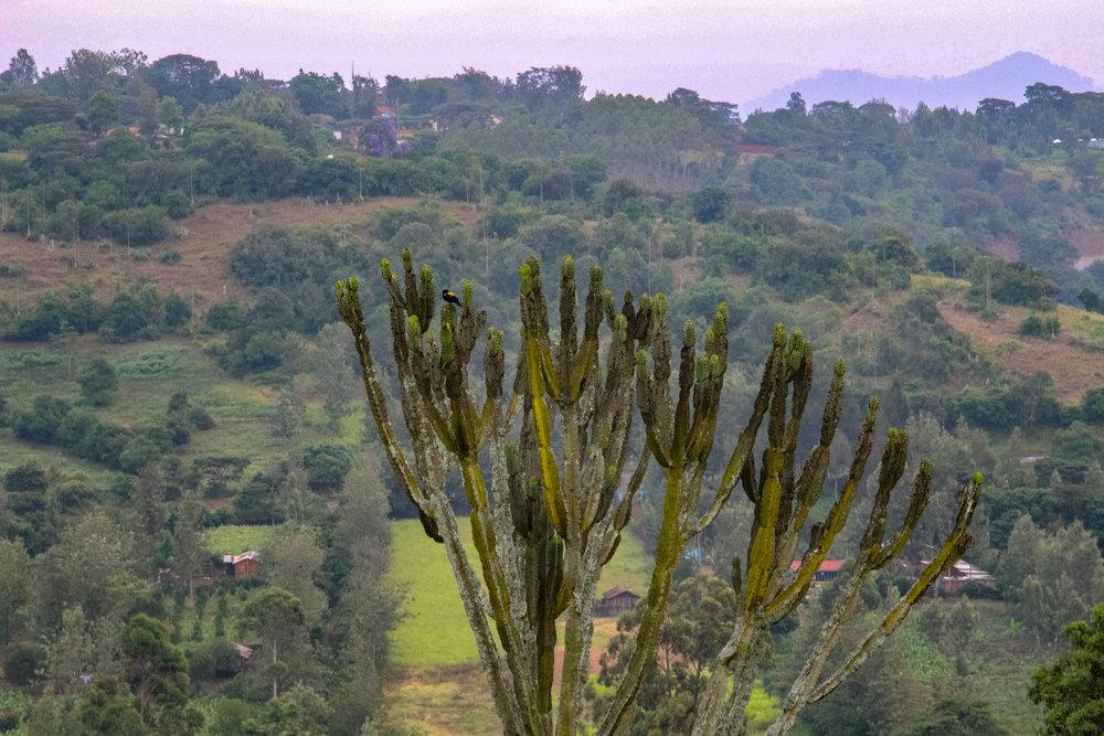 GDF Fundraiserclimb & coffee experience - Mt. Kenya - mount kenya - dates tbc