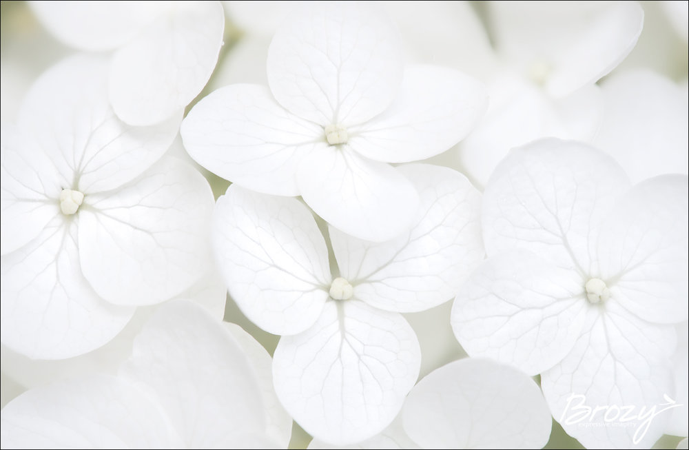 irrepressibly white