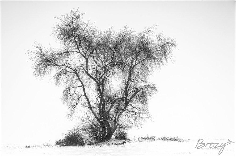 winter botany