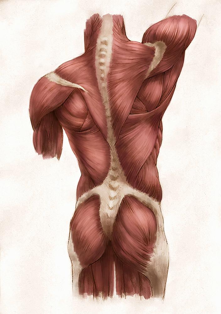 smitheman_anatomy_paint.jpg