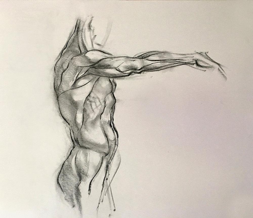 anatomy1.jpg