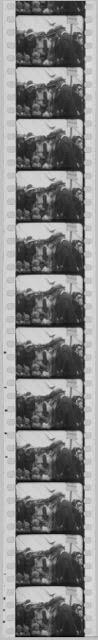 Lincolnshire Film Archive  Strip of Old Film.jpg