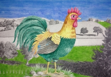 - Rooster on the Farm, watercolor and graphite, 12 x 16 1/2