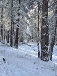 trail in snow.JPG
