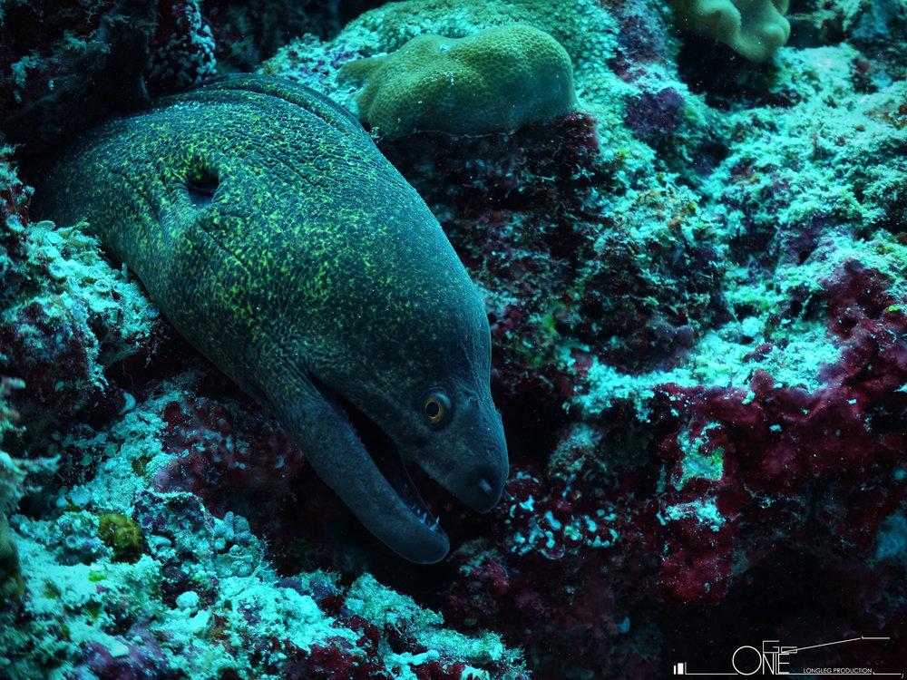 LongLeg Production     Underwater Photography