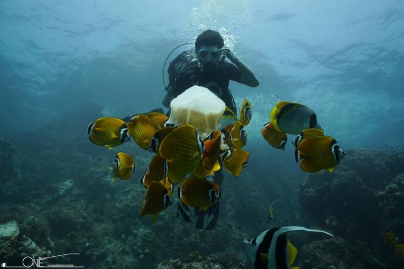 水肺潜水员(SCUBA DIVER) - 时间:2天—3天第一天为泳池训练和书面课程及笔试(此部分可分为两天进行)之后一天完成两次开放水域潜水。