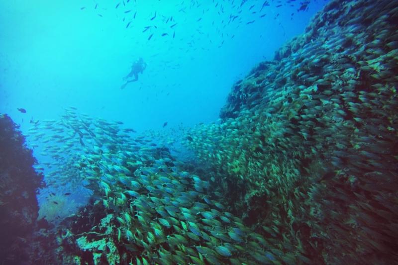 开放水肺潜水员(OPEN WATER DIVER) - 时间:3天—4天第一天为泳池训练和书面课程及笔试(此部分可分为两天进行)之后两天完成四次开放水域潜水。