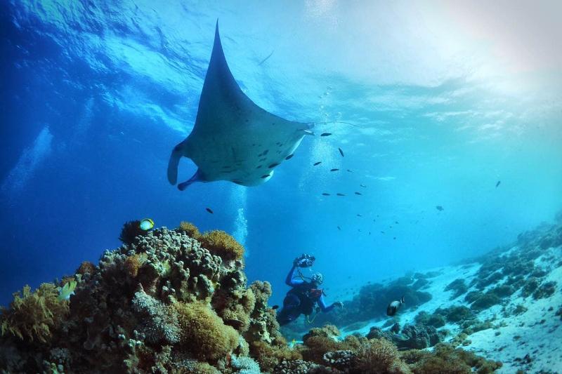 进阶开放水域潜水员(ADVANCED OPEN WATER DIVER) - 时间:2天—3天第一天书面课程问答(此部分可在潜水行程途中进行,需要选择大船进行学习)完成五次开放水域潜水。