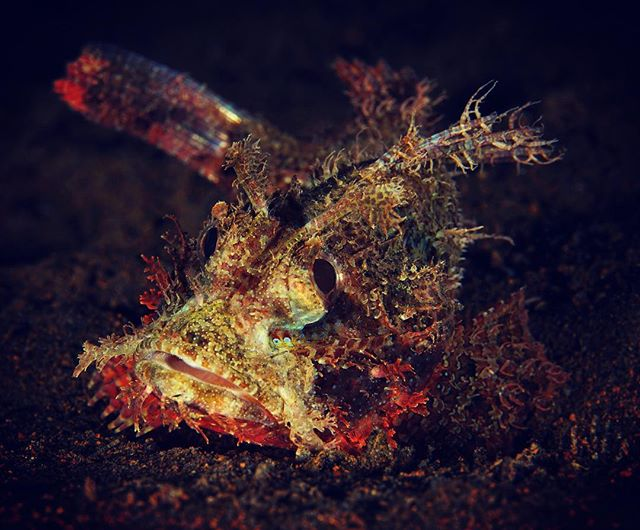 Not sure about that one🧐Scorpionfish or stonefish? #scubadiving #underwater #underwaterphotography #underwaterphoto #protectthereef #komodo #indonesia #ocean #sony #nauticamhousings #marinelife #protecttheocean