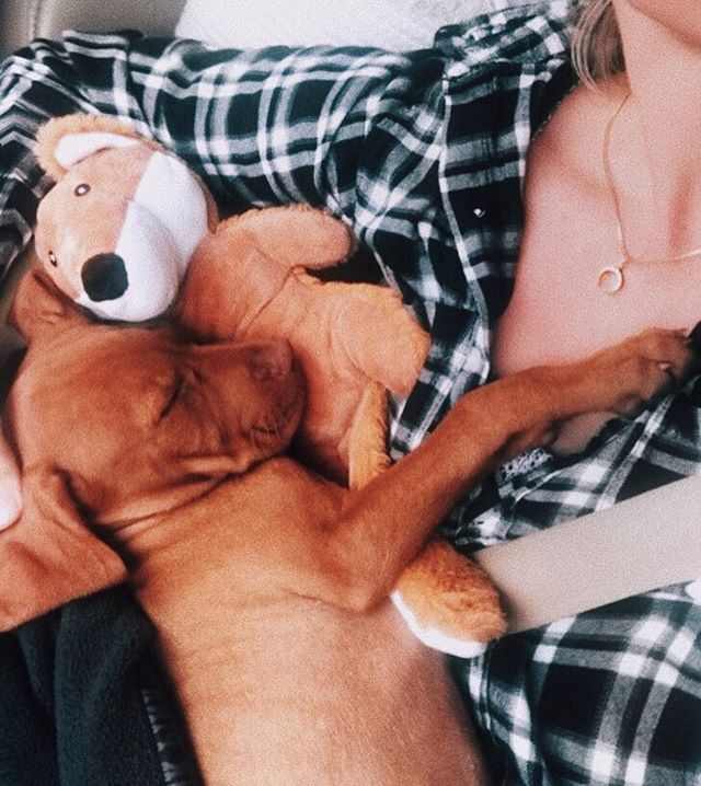 Fox and the Hound ✖︎ welcome to our fam Brixton babe ♡ #brixpics #l88babevip