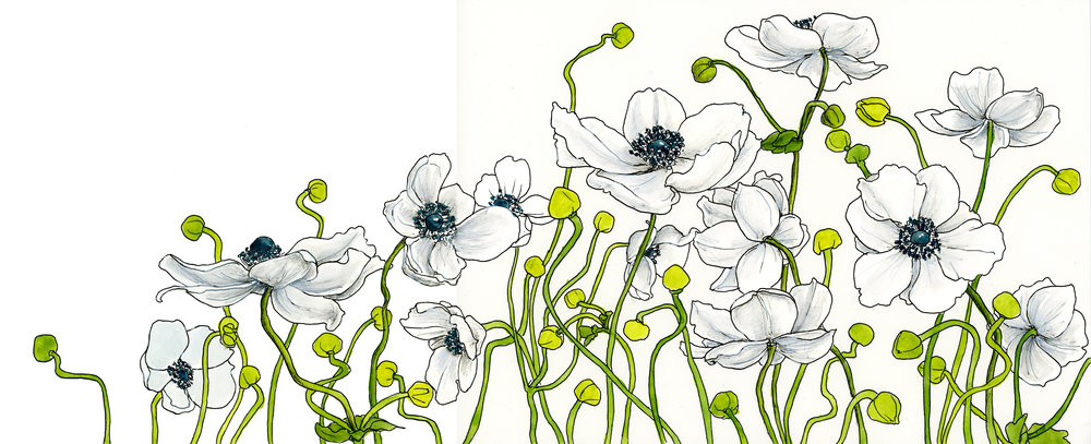 anenomes with white.jpg