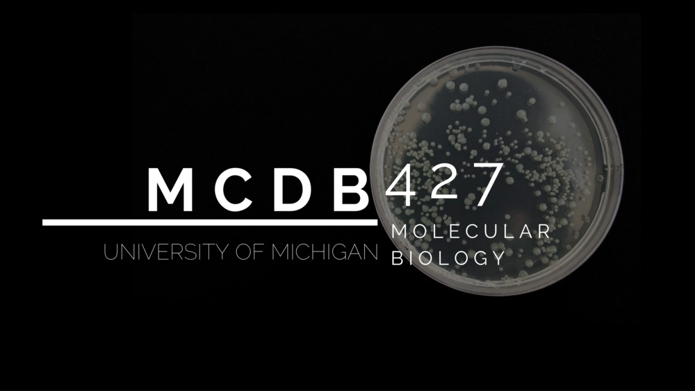 YouTube banner image for MCDB 427's channel.