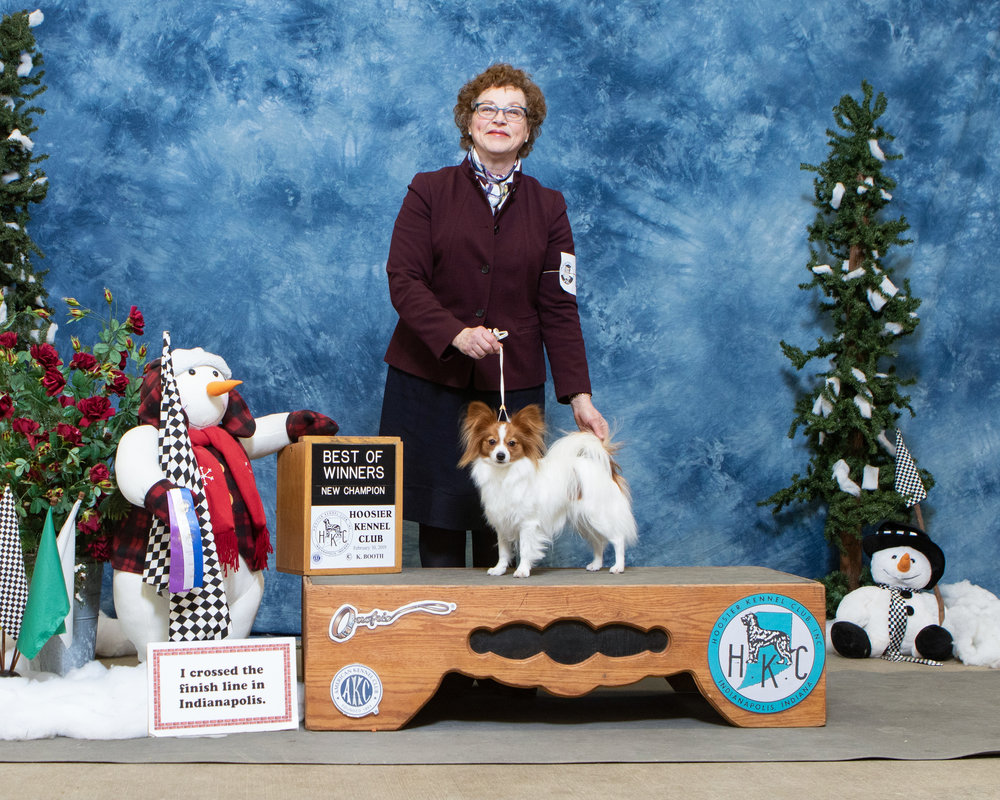 Star (Starsign's Arwen EvenStar at BriarKeep) received Best of Winners at the Indy Winter Classic to finish off her Champion title! 2/10/19