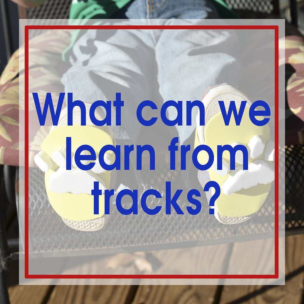 WhatCanWeLearnFromTracks.jpg
