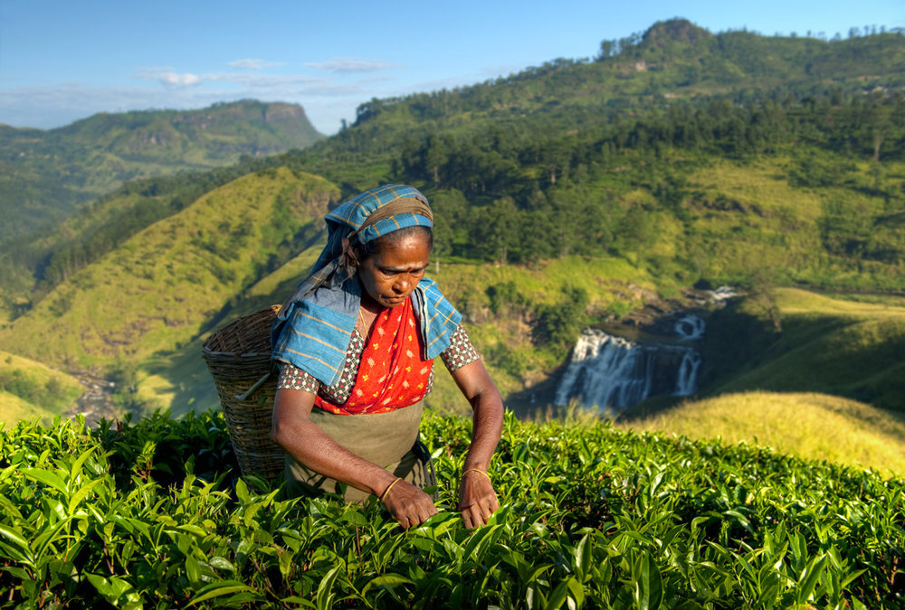 sri-lanka-tea-picker.jpg