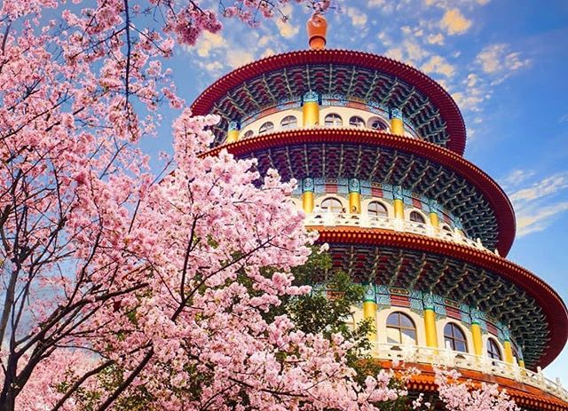 Chinese Lunar Year celebrations are fast approaching and what better way to celebrate than travel.  Based on airfare trends, climate data, and peak travel times, April is the perfect time to visit Taiwan.  Head to Yangmingshan National Park to catch tens of thousands of cherry blossoms and azalea bushes in all their red, white, and pink glory.  RP: @businessinsider 📷: Shutterstock  #benative #explore #cny #chinesenewyear #taiwan #chinese #language #translate #learn #culture #translation #language