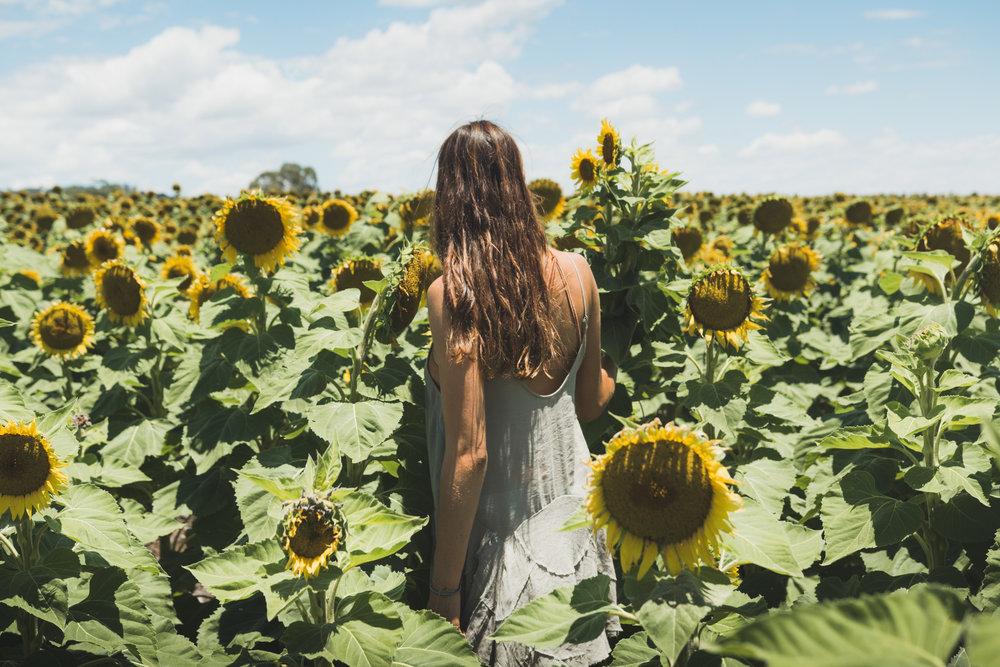 Sunflower Dream | New South Wales.jpg
