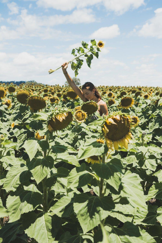 Sunflower WebRes-2.jpg
