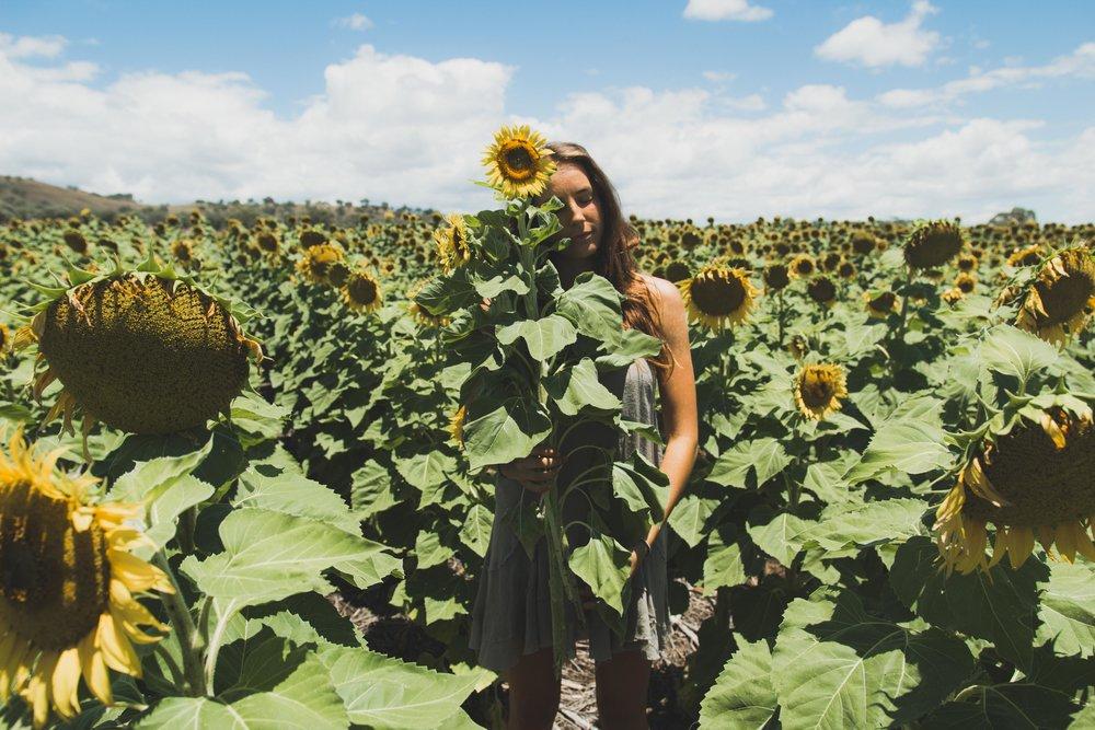 Sunflower WebRes-4.jpg