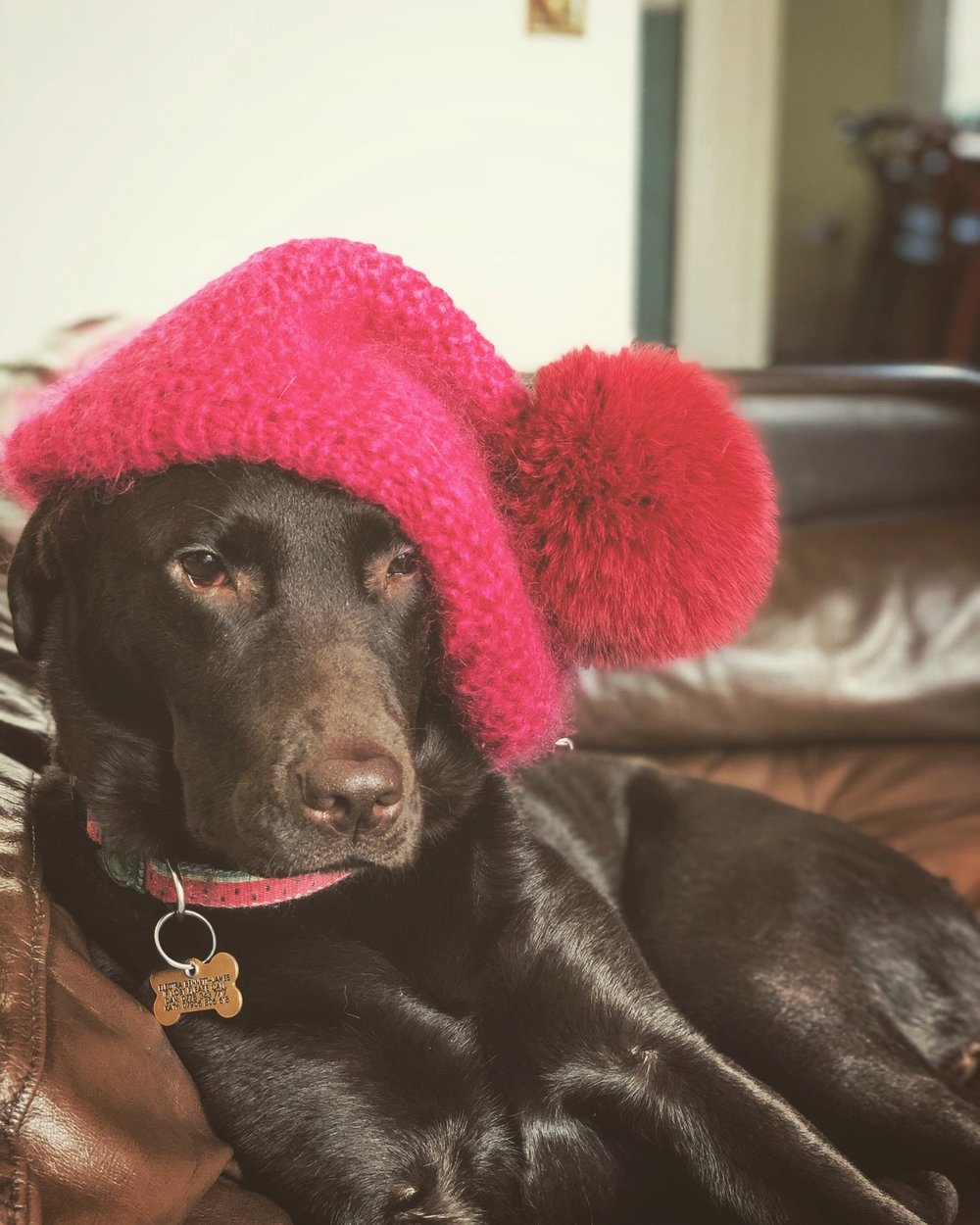 Lexi with Hat.jpg
