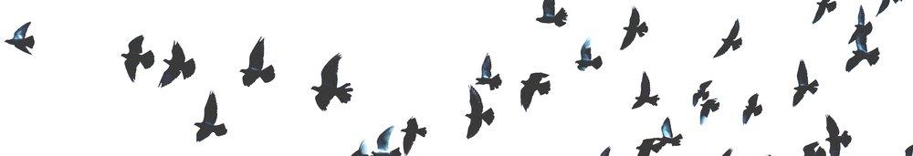 animal-avian-bird-203088.jpg