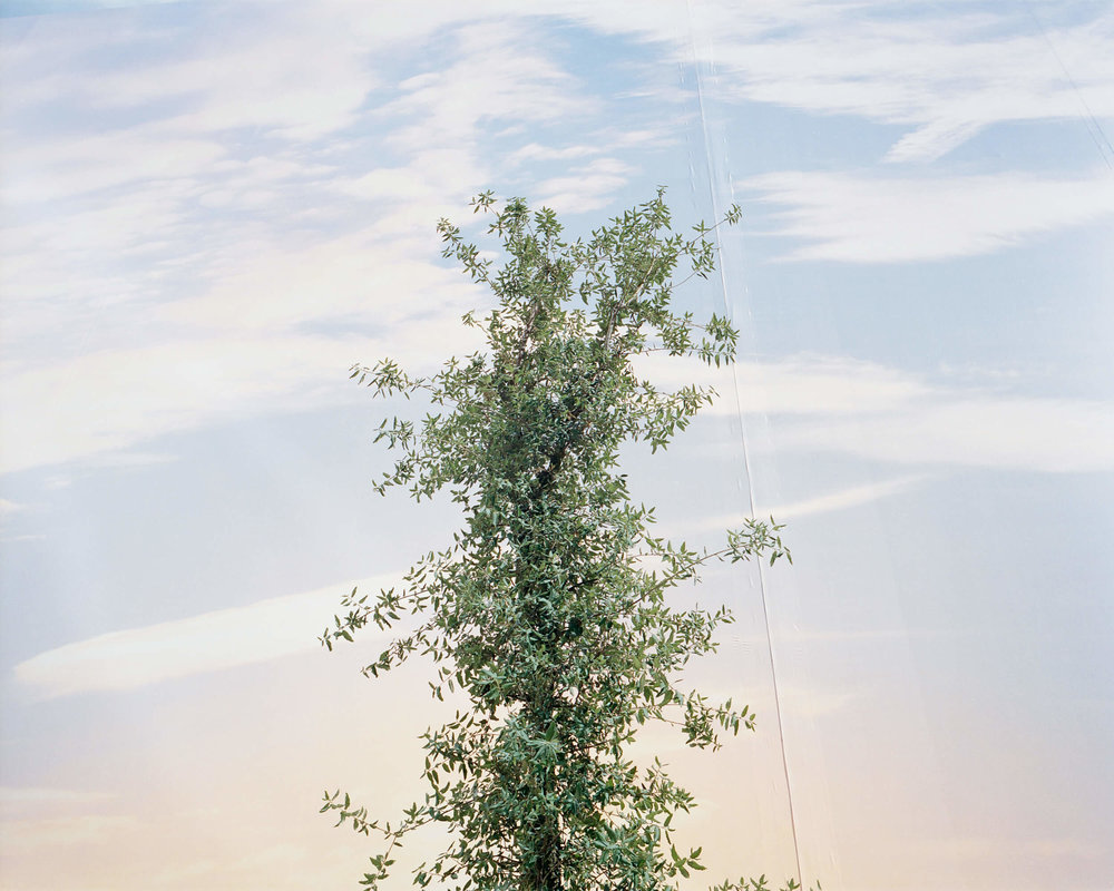 marco-barbeiri-the-nature-of-survival-1.jpg