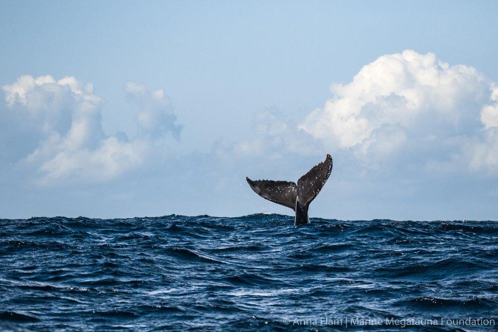 Whale flukes-8588.jpg