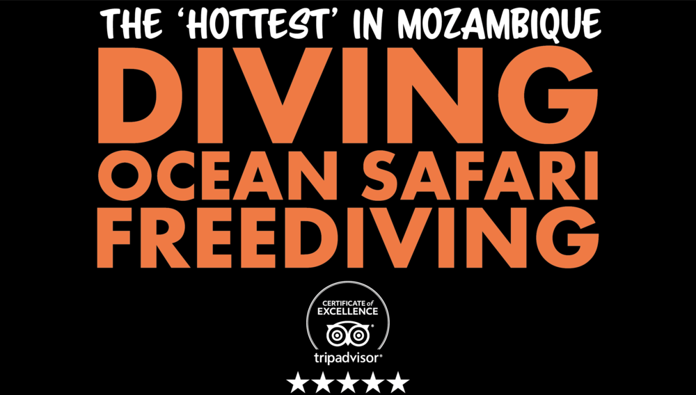 The 'Hottest' Diving in Mozambique