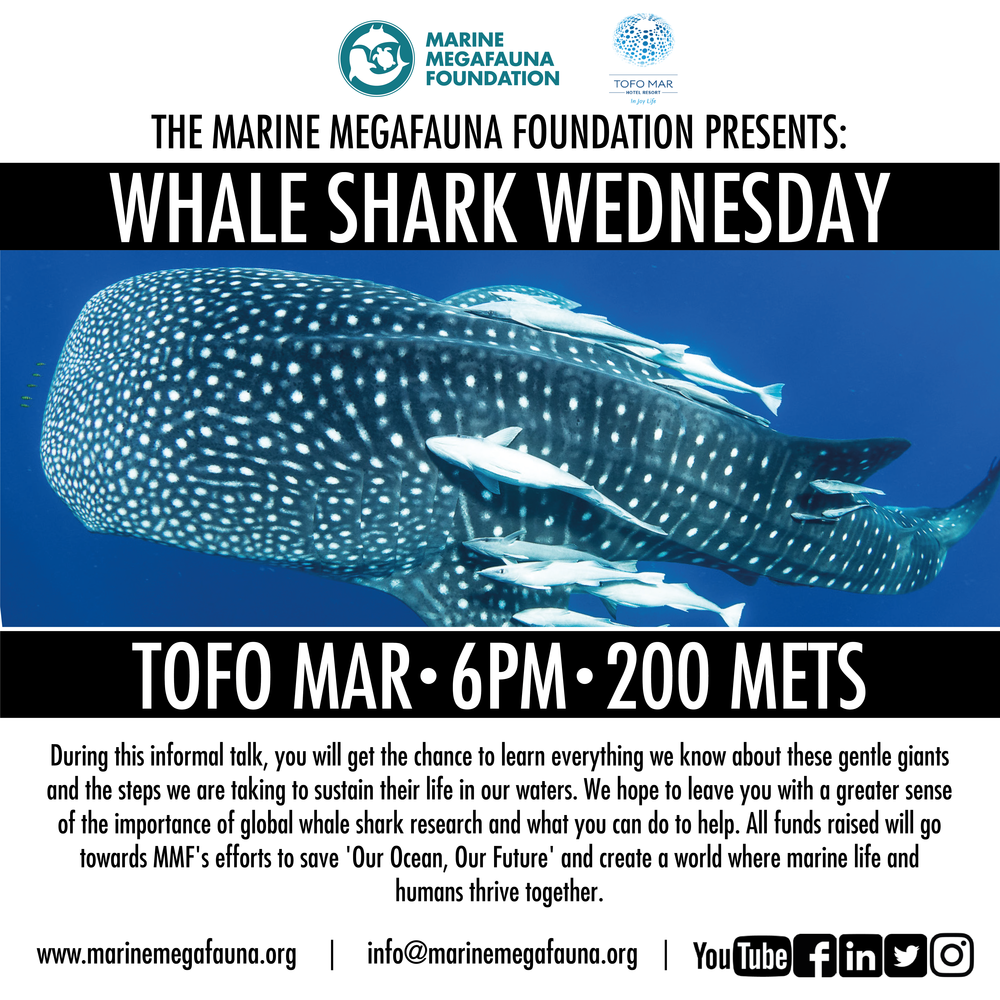 Whale Shark Wednesday - Tofo Mar.png