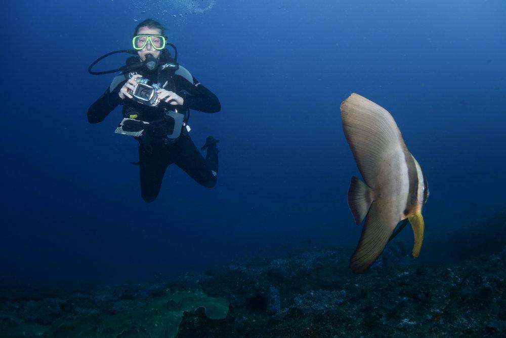 Diver and batfish -03518.jpg