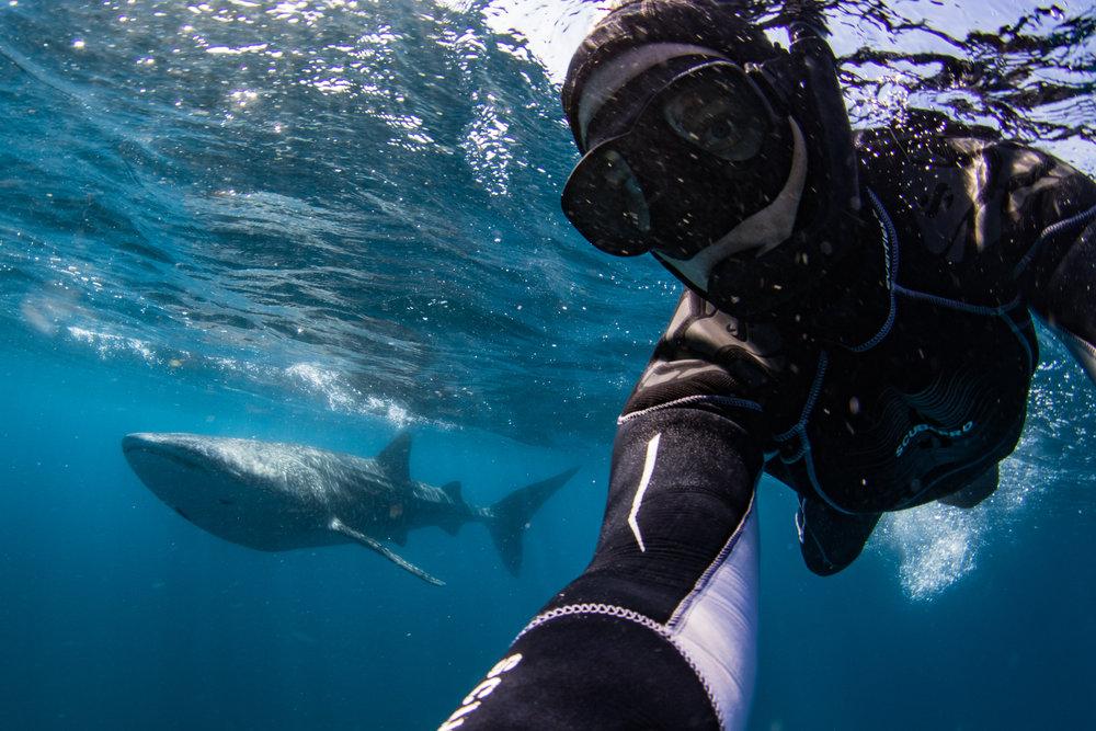 Anna Flam whale shark