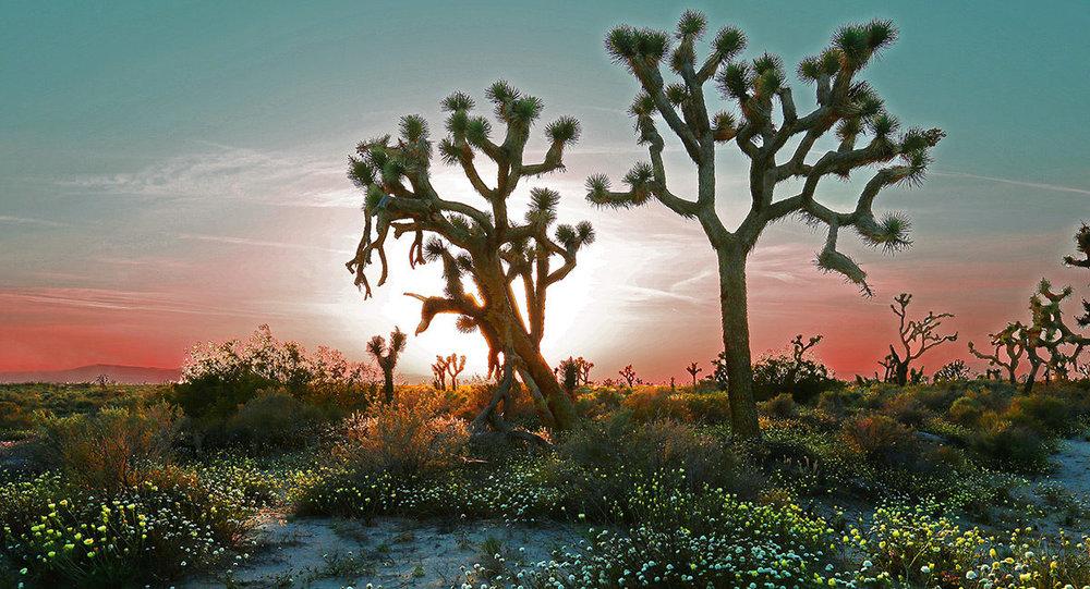 desert-in-spring-1200x649.jpg