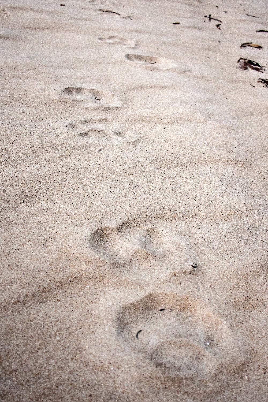 jaguarprints.jpg