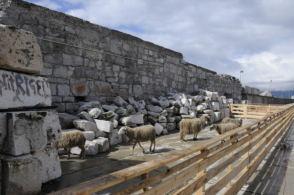 Pier Shear Project - Project: April - June 2011. In Rijeka, Croatia doing research for a new project called Pier Shear - Bringing sheep to the recently appropriated public pier, so their wool can be transformed into new artworks made as collaborations between local artists and craftsman to reveal the complexity of Rijeka's transitioning future.