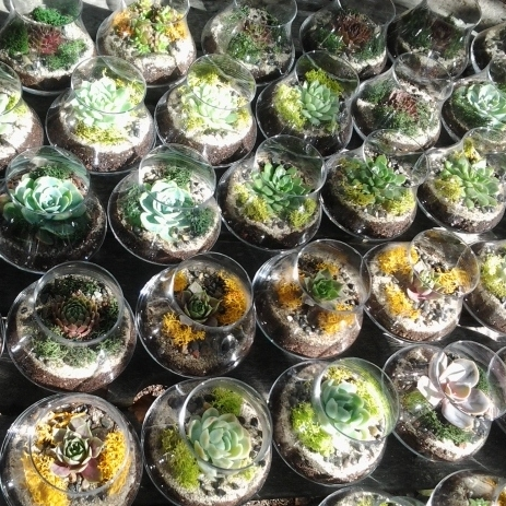 succulent terrariums wedding favors corporate gifts