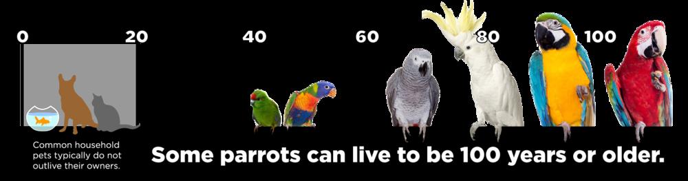 birdtimelineblacbar1.png