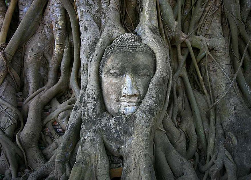Chociaż praktyka jogi podlega nieustannej ewolucji, w istocie joga jest kultywowaniem uważności. To na co kierujemy uwagę i postawa z jaką to czynimy wpływa znacząco na sposób w jaki doświadczamy siebie i naszego życia. - Sarah Powers