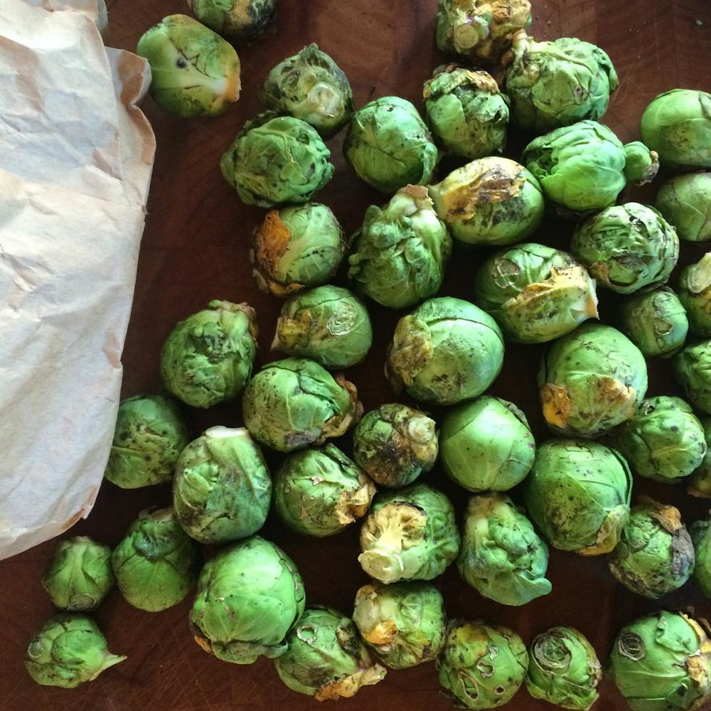 brussel sprouts at plum nelli washington.jpg