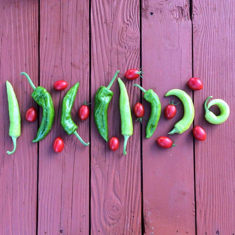 chillis and tomatoes fresh grown garden at plum nelli washington.jpg