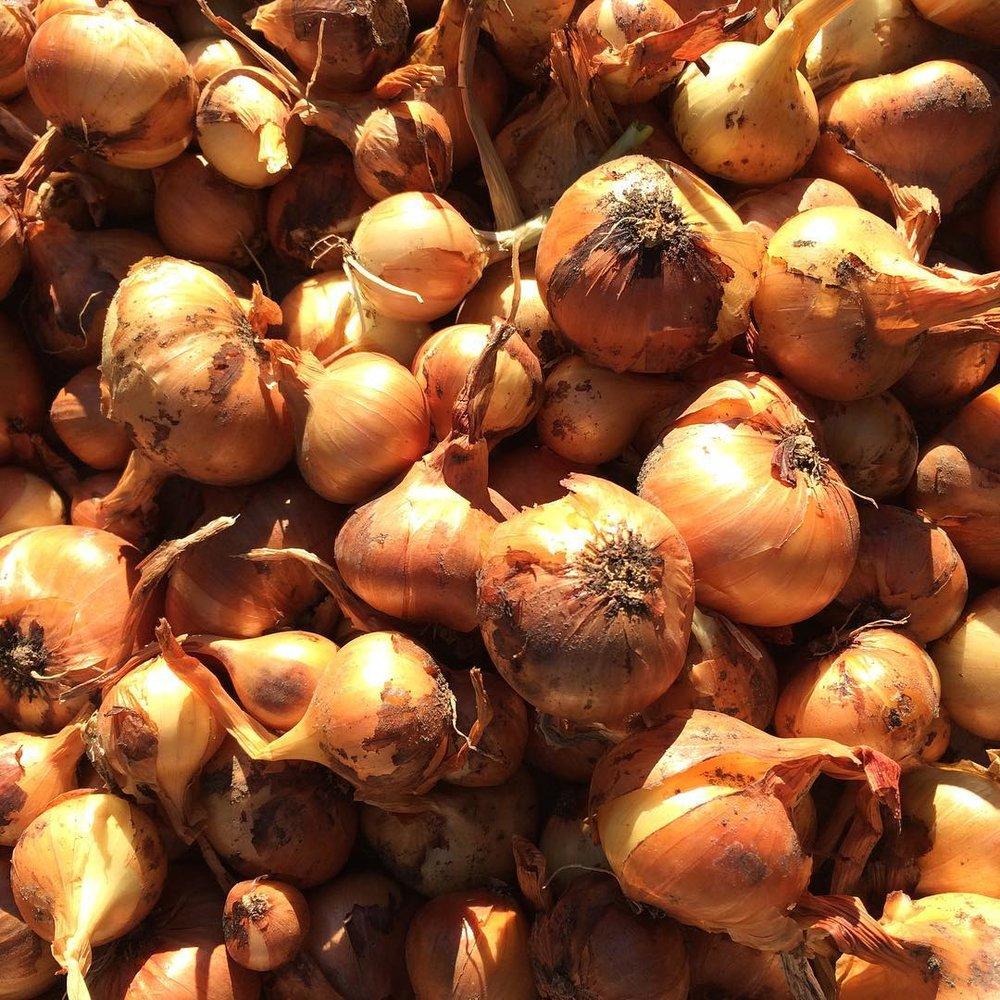 fresh garlic and onions at plum nelli washington.jpg