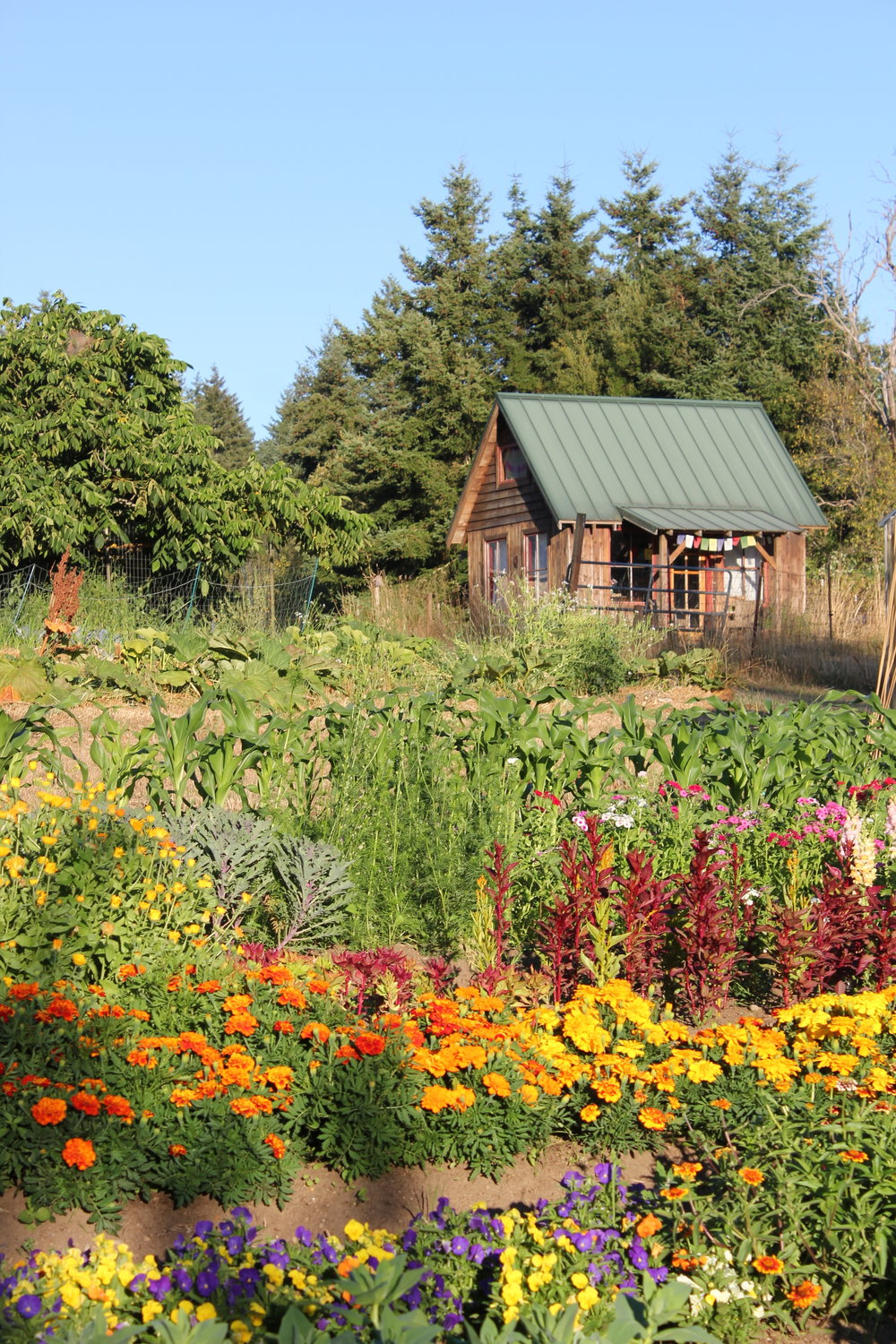 bungalow cabin and flowers and pac nw homestead plum nelli.JPG