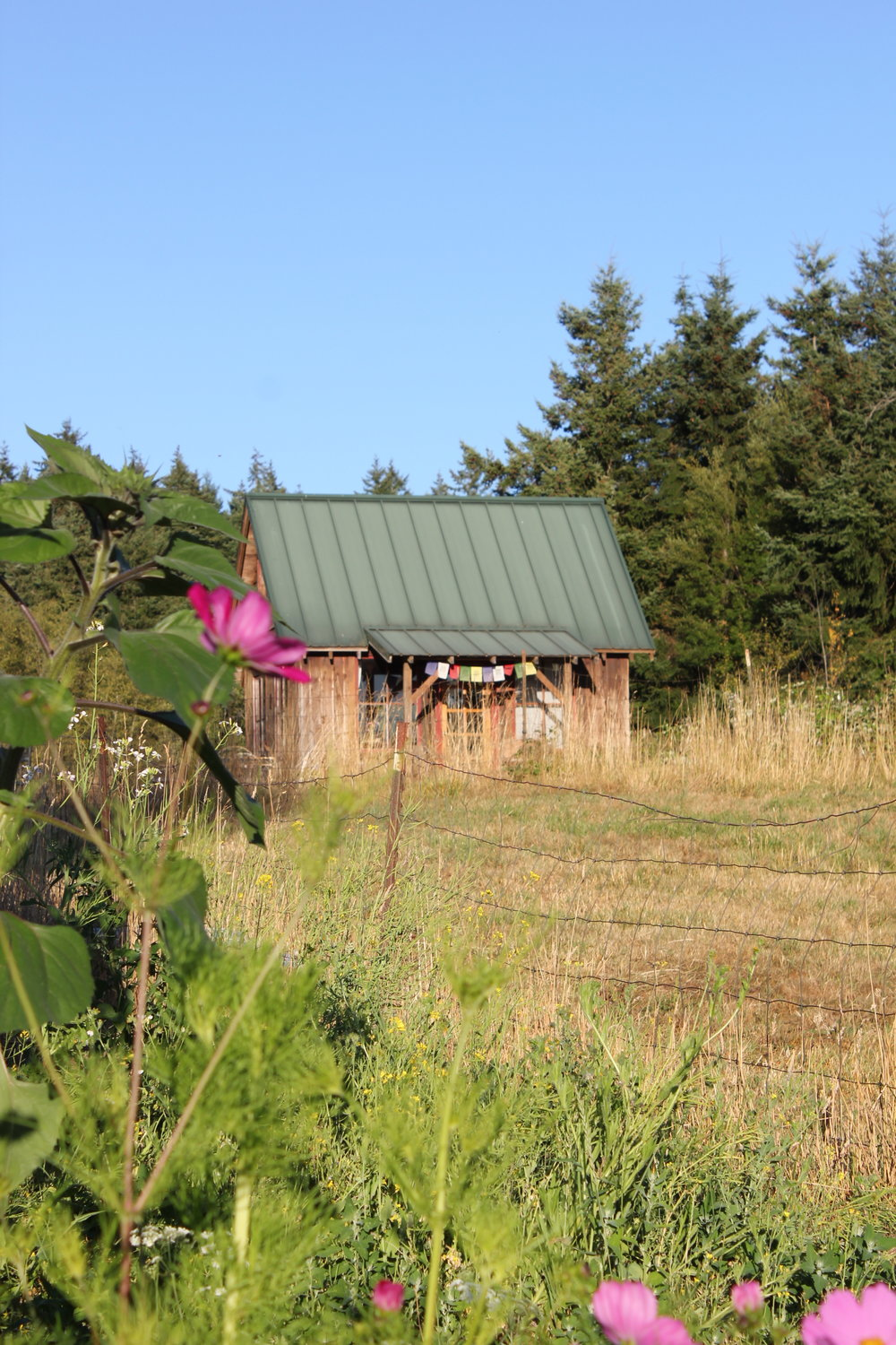 rustic cabin and garden at plum nelli.JPG