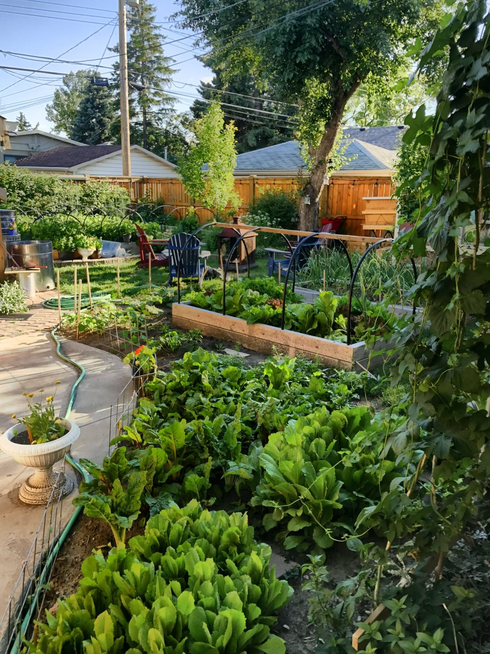 Maximizing our urban space to provide a local source of food.