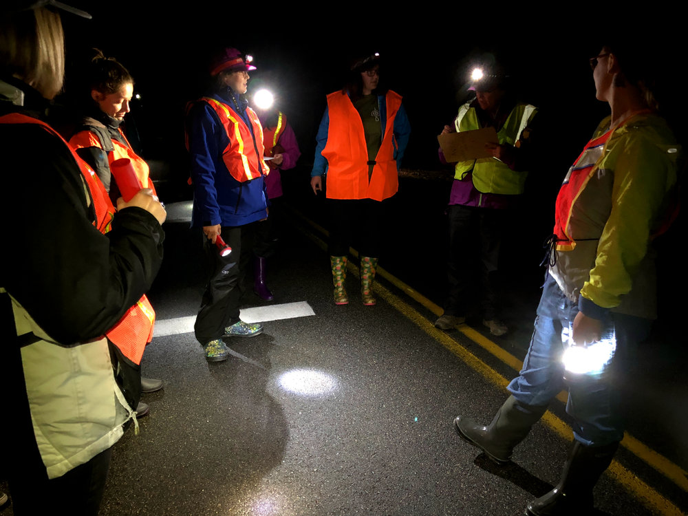 Salamander Crossing Brigade volunteers coordinate with Brett Thelen (second from right), Science Director of the Harris Center for Conservation Education, on a side-road in Keene, NH. (Anna Miller/Animalia Podcast)